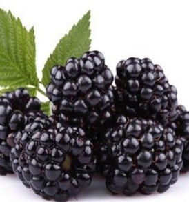 Blackberry flavoured E-Liquid